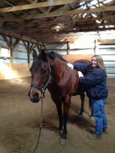 Julie Ennis horse Bud photo - testimonial